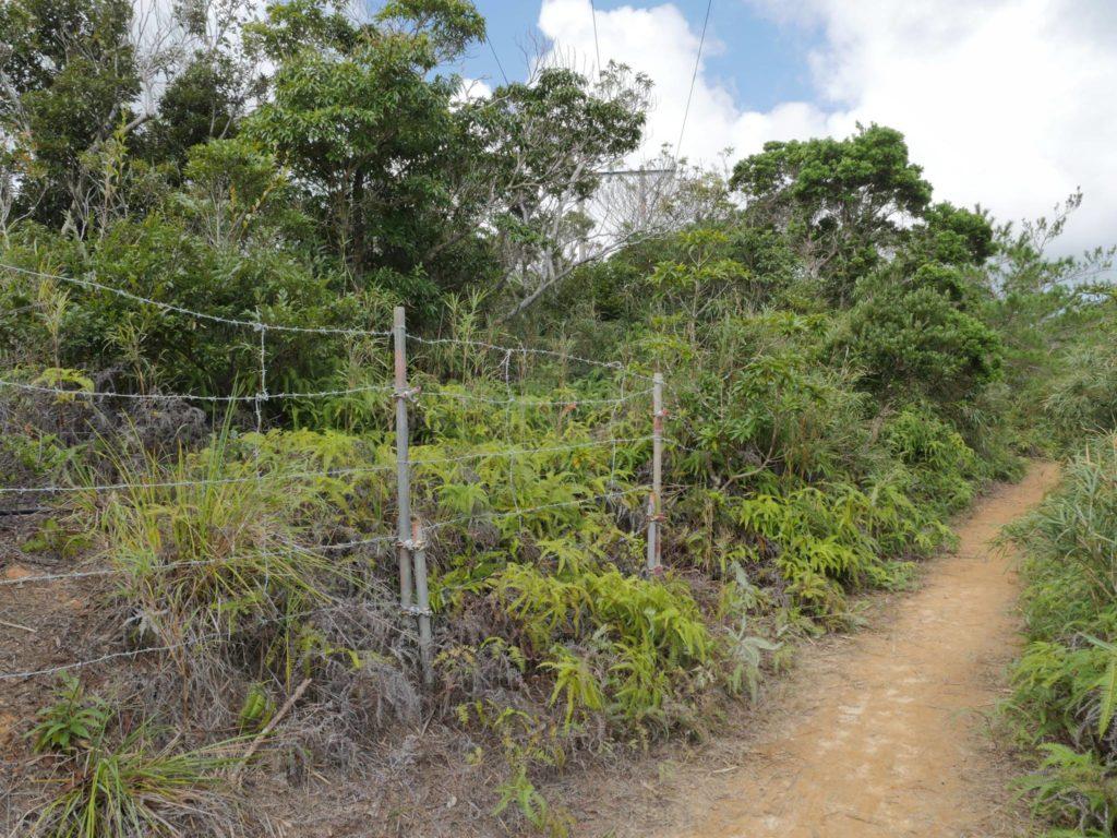 有刺鉄線が張られた、やんばるの森